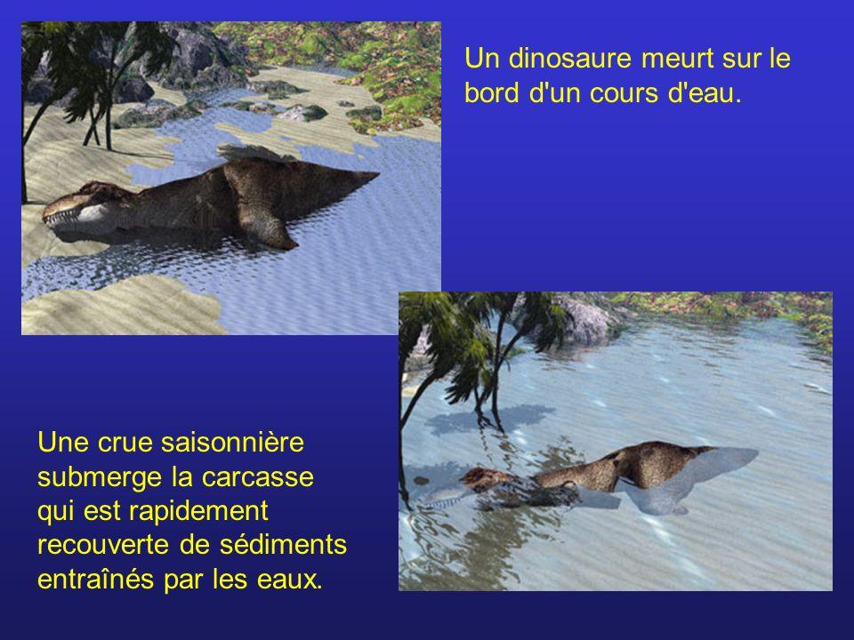 Un dinosaure meurt sur le bord d'un cours d'eau. Une crue saisonnière submerge la carcasse qui est rapidement recouverte de sédiments entraînés par le