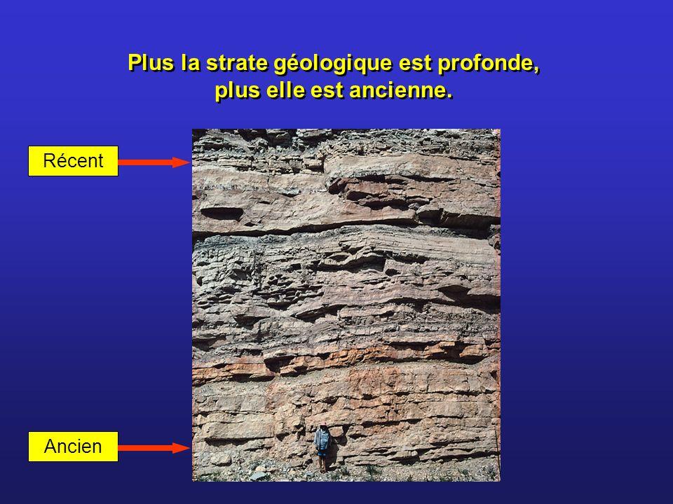 Plus la strate géologique est profonde, plus elle est ancienne. Récent Ancien