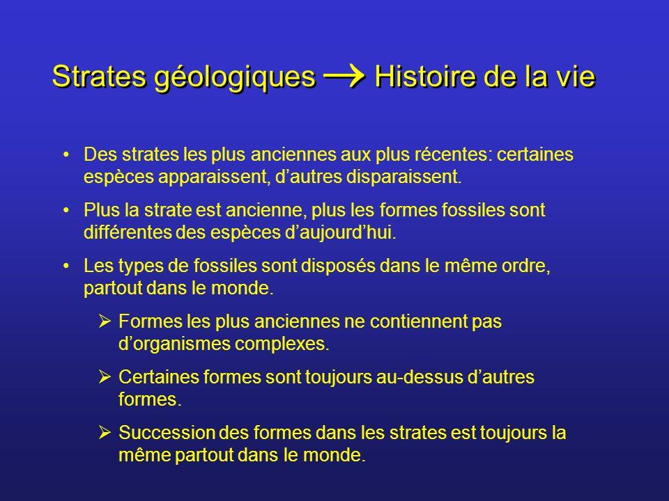 Strates géologiques Histoire de la vie Des strates les plus anciennes aux plus récentes: certaines espèces apparaissent, dautres disparaissent. Plus l