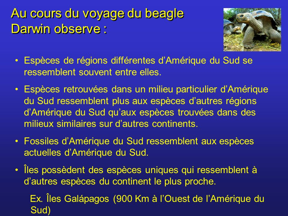 Au cours du voyage du beagle Darwin observe : Espèces de régions différentes dAmérique du Sud se ressemblent souvent entre elles. Espèces retrouvées d
