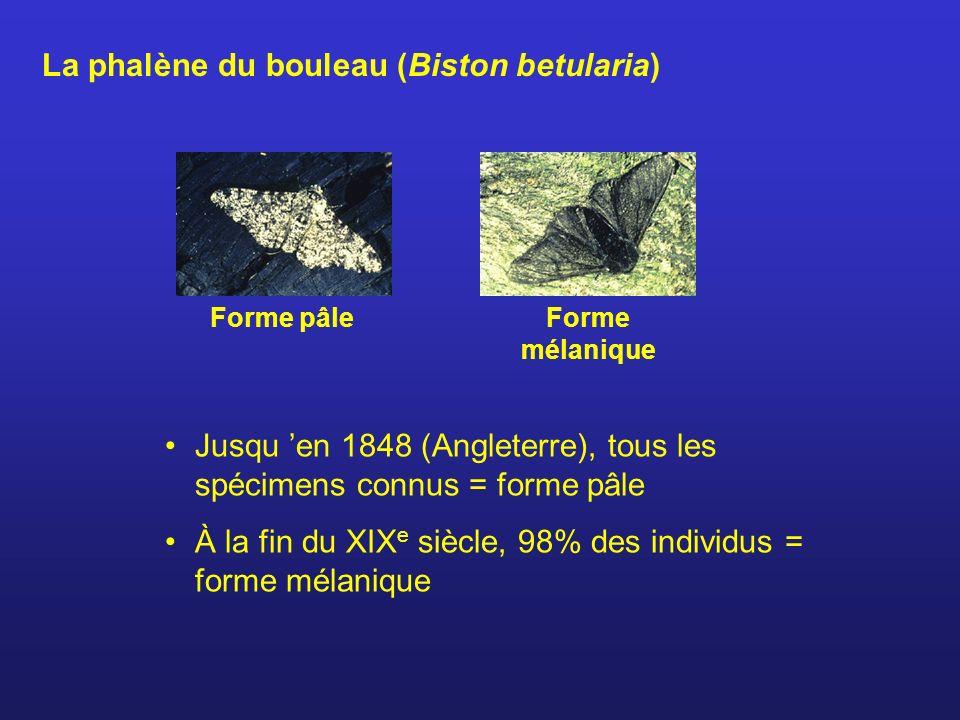 La phalène du bouleau (Biston betularia) Jusqu en 1848 (Angleterre), tous les spécimens connus = forme pâle À la fin du XIX e siècle, 98% des individu