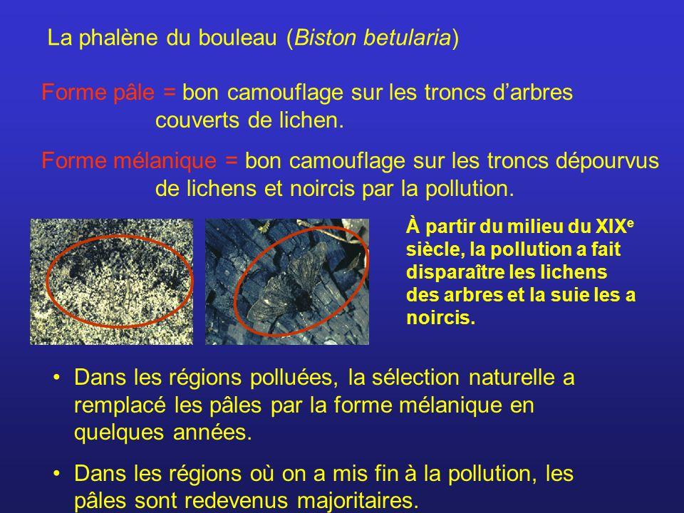 Forme pâle = bon camouflage sur les troncs darbres couverts de lichen. Forme mélanique = bon camouflage sur les troncs dépourvus de lichens et noircis