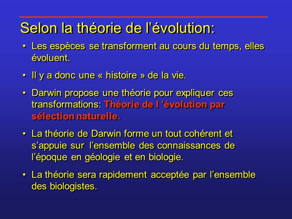 Selon la théorie de lévolution: Les espèces se transforment au cours du temps, elles évoluent. Il y a donc une « histoire » de la vie. Darwin propose