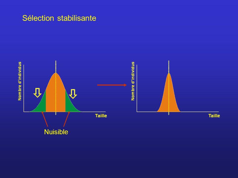 Sélection stabilisante Nuisible