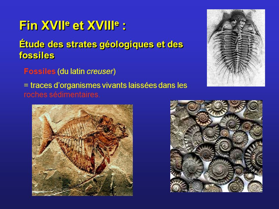 Fin XVII e et XVIII e : Étude des strates géologiques et des fossiles Fin XVII e et XVIII e : Étude des strates géologiques et des fossiles Fossiles (