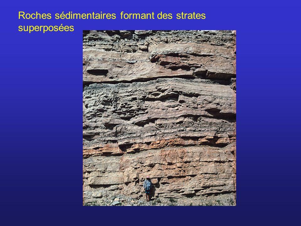 Un organisme peut se fossiliser SI: Recouvert de sédiments avant dêtre complètement décomposé (milieu aquatique).
