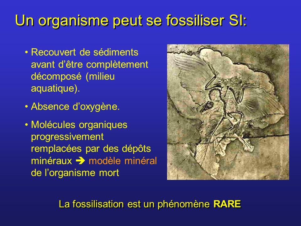 Un organisme peut se fossiliser SI: Recouvert de sédiments avant dêtre complètement décomposé (milieu aquatique). Absence doxygène. Molécules organiqu