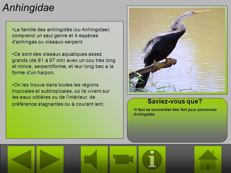 Anhingidae La famille des anhingidés (ou Anhingidae) comprend un seul genre et 4 espèces d anhingas ou oiseaux-serpent.
