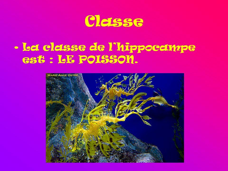 Classe La classe de lhippocampe est : LE POISSON.