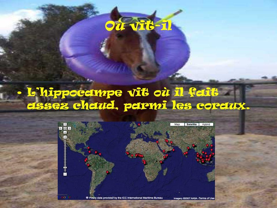 Où vit-il Lhippocampe vit où il fait assez chaud, parmi les coraux.