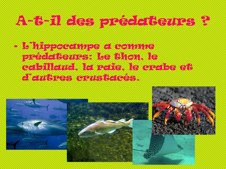 A-t-il des prédateurs ? Lhippocampe a comme prédateurs: Le thon, le cabillaud, la raie, le crabe et dautres crustacés.