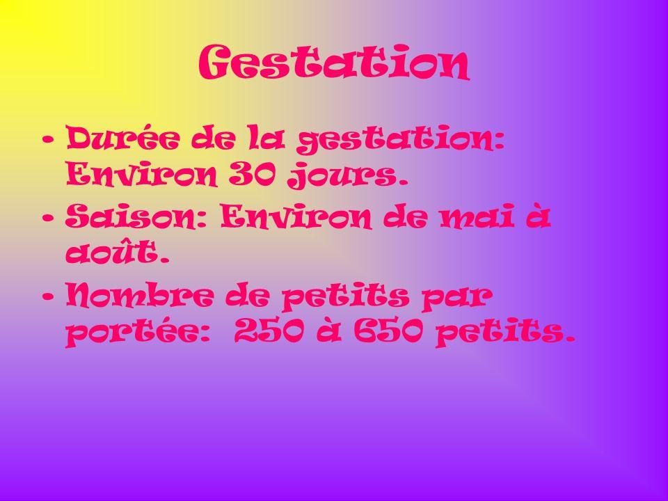 Gestation Durée de la gestation: Environ 30 jours. Saison: Environ de mai à août. Nombre de petits par portée: 250 à 650 petits.