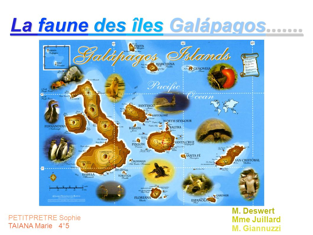 PETITPRETRE Sophie TAIANA Marie 4°5 La faune des îles Galápagos....... M. Deswert Mme Juillard M. Giannuzzi