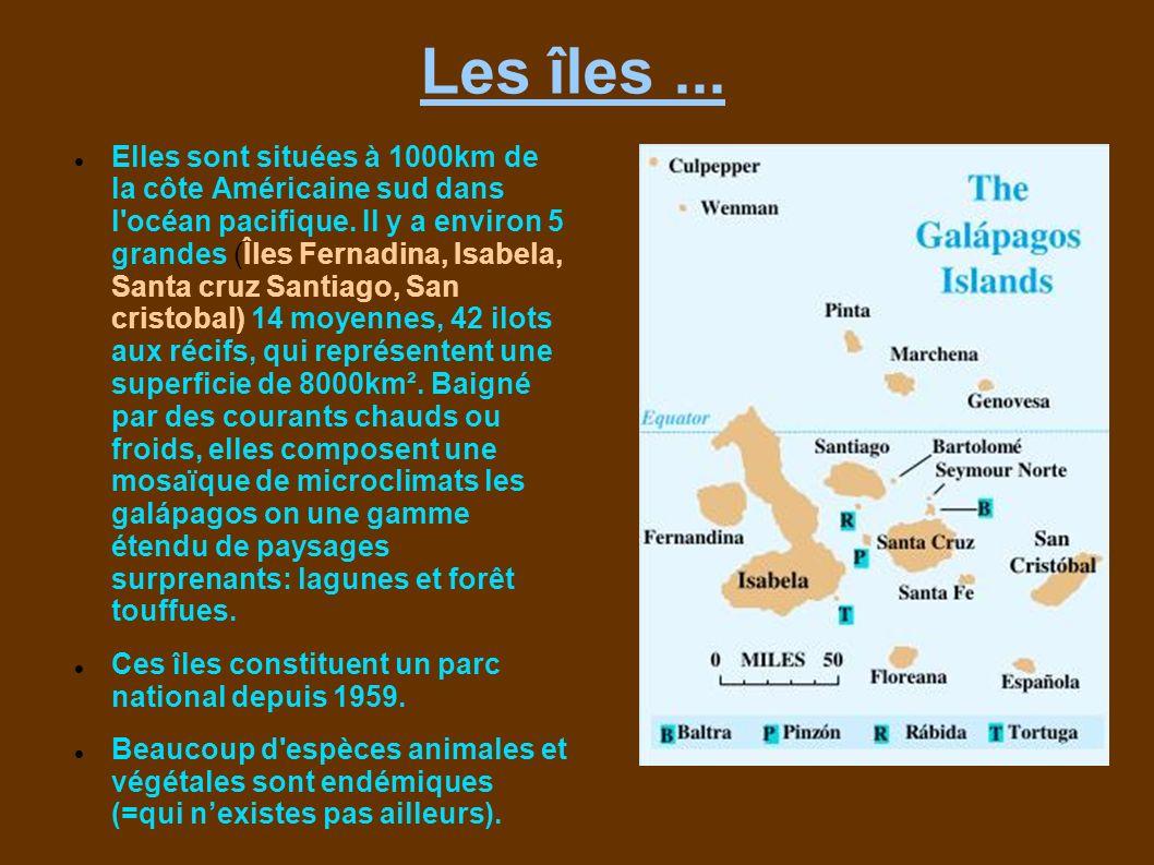 Les îles... Elles sont situées à 1000km de la côte Américaine sud dans l'océan pacifique. Il y a environ 5 grandes (Îles Fernadina, Isabela, Santa cru