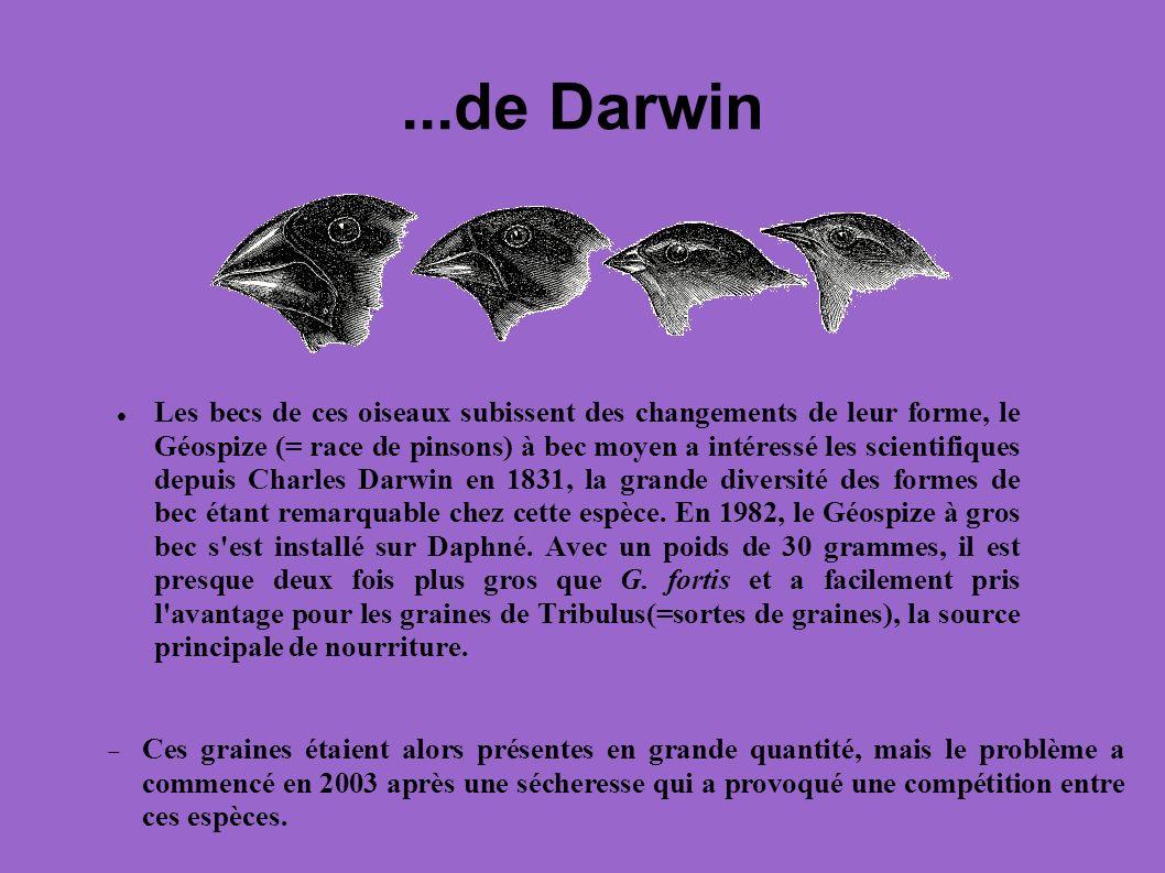 ...de Darwin Les becs de ces oiseaux subissent des changements de leur forme, le Géospize (= race de pinsons) à bec moyen a intéressé les scientifique