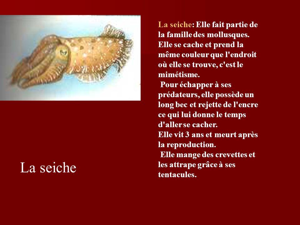 La seiche La seiche: Elle fait partie de la famille des mollusques.