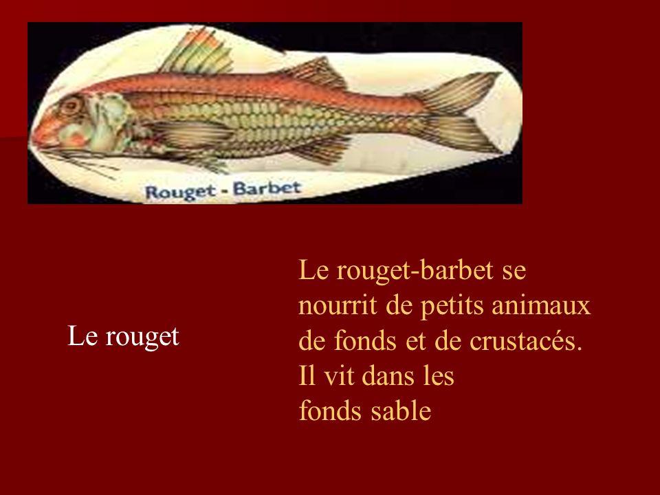 Le rouget Le rouget-barbet se nourrit de petits animaux de fonds et de crustacés.