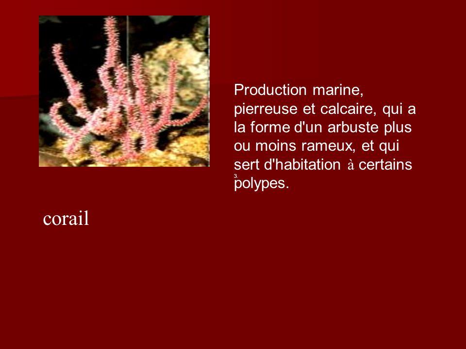 corail Production marine, pierreuse et calcaire, qui a la forme d un arbuste plus ou moins rameux, et qui sert d habitation à certains polypes.