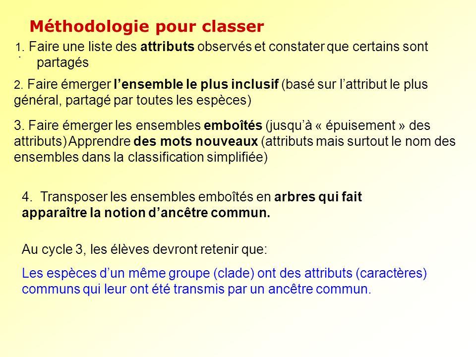 . Méthodologie pour classer Au cycle 3, les élèves devront retenir que: Les espèces dun même groupe (clade) ont des attributs (caractères) communs qui