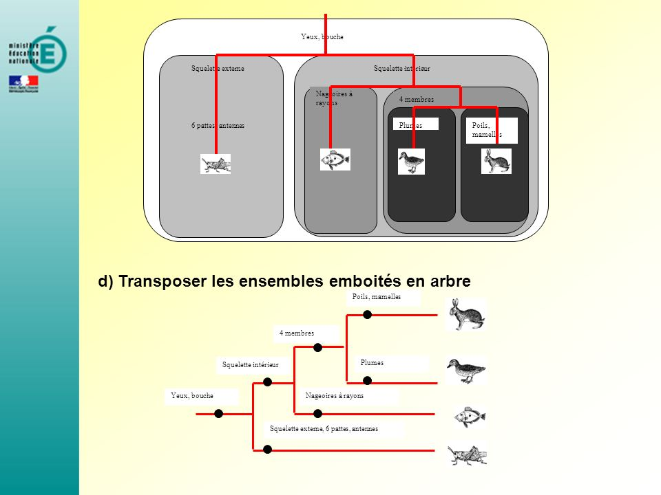 d) Transposer les ensembles emboités en arbre Yeux, bouche Squelette externeSquelette intérieur 4 membres Poils, mamelles Plumes6 pattes, antennes Nag