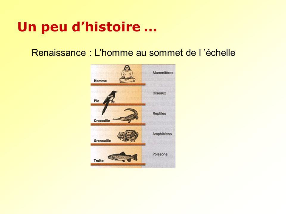 Un peu dhistoire … Renaissance : Lhomme au sommet de l échelle