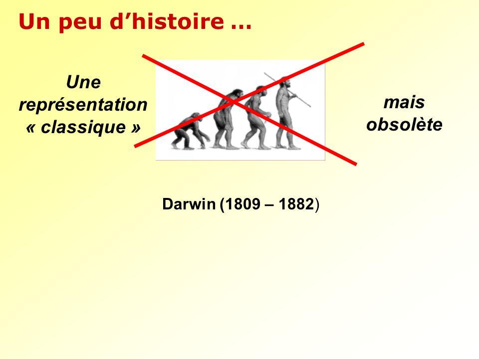 Un peu dhistoire … Darwin (1809 – 1882) Une représentation « classique » mais obsolète
