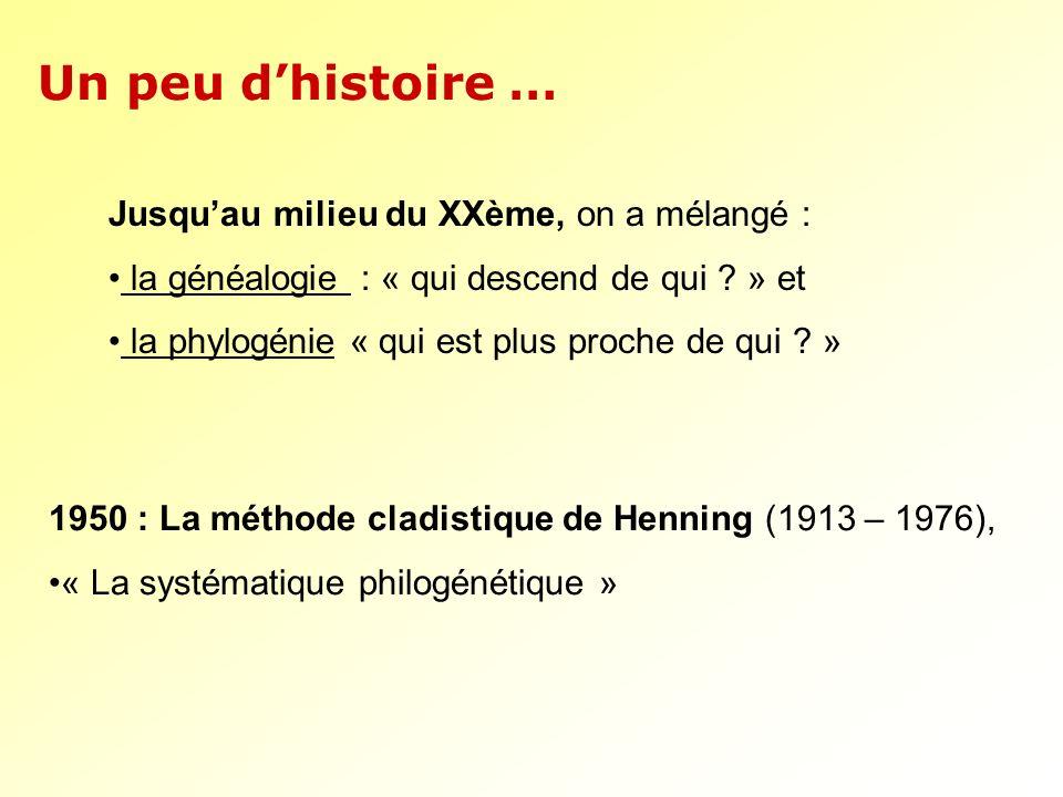 Jusquau milieu du XXème, on a mélangé : la généalogie : « qui descend de qui ? » et la phylogénie « qui est plus proche de qui ? » Un peu dhistoire …