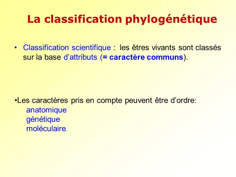 Classification scientifique : les êtres vivants sont classés sur la base dattributs (= caractère communs). La classification phylogénétique Les caract