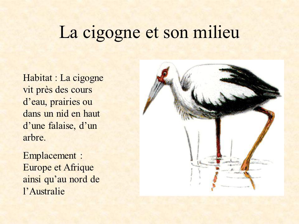 La cigogne Embranchement : vertébrés Classe : oiseaux Ordre : ciconiiformes Famille : ciconiidés Caractéristiques physiques: La cigogne a des plumes b