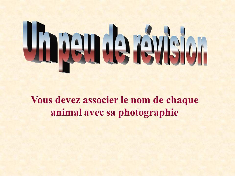 La cigogne et son milieu Habitat : La cigogne vit près des cours deau, prairies ou dans un nid en haut dune falaise, dun arbre. Emplacement : Europe e