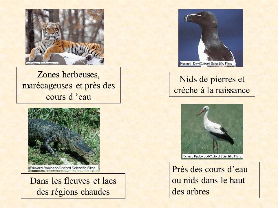 Vous devez maintenant associer différents types dhabitat à chacun de ces animaux Près des cours deau ou nids dans le haut des arbres Nids de pierres e