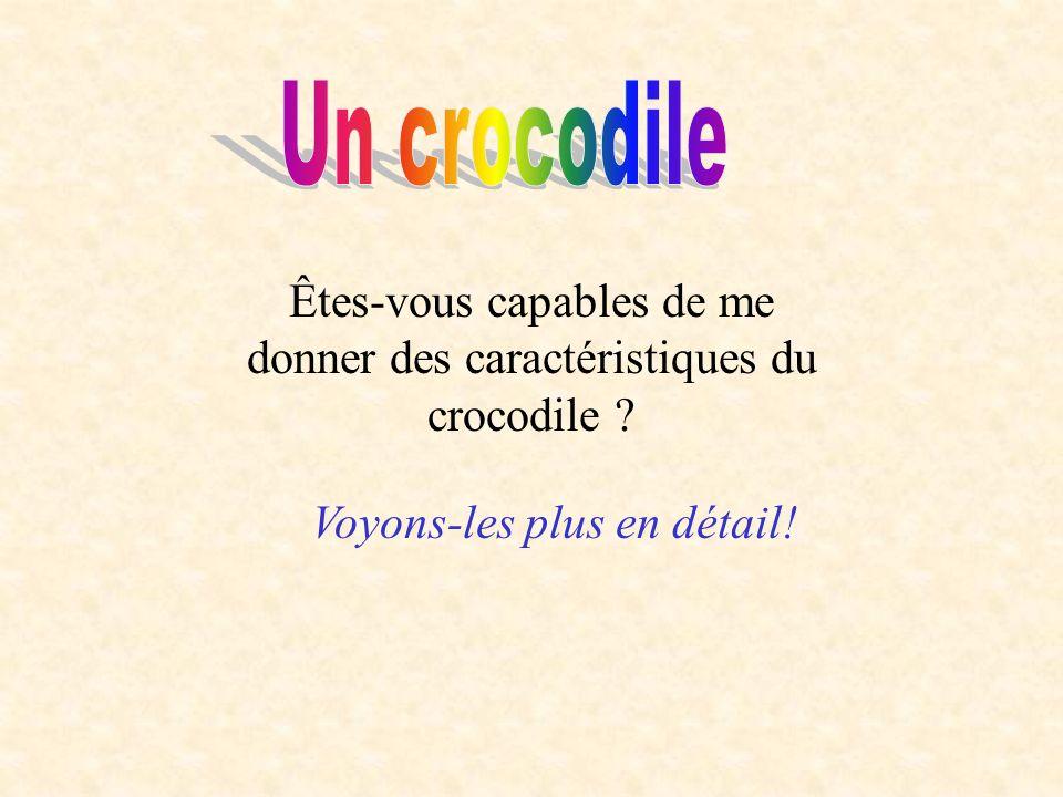 Êtes-vous capables de me donner des caractéristiques du crocodile ? Voyons-les plus en détail!