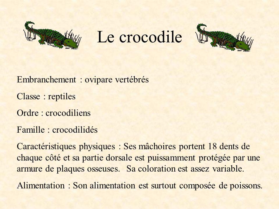 Le crocodile Embranchement : ovipare vertébrés Classe : reptiles Ordre : crocodiliens Famille : crocodilidés Caractéristiques physiques : Ses mâchoires portent 18 dents de chaque côté et sa partie dorsale est puissamment protégée par une armure de plaques osseuses.
