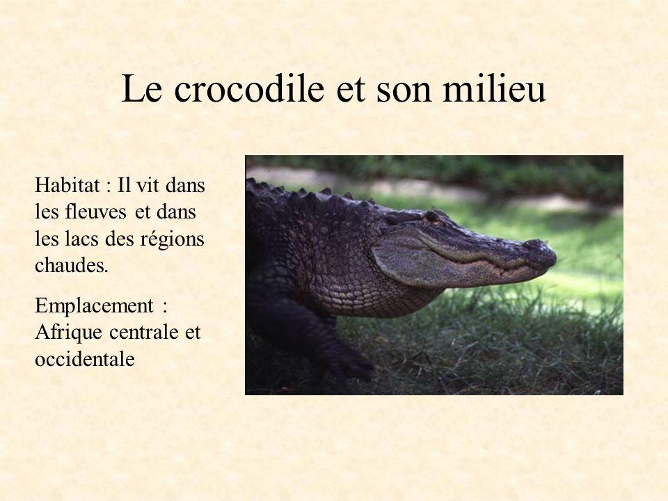 Le crocodile Embranchement : ovipare vertébrés Classe : reptiles Ordre : crocodiliens Famille : crocodilidés Caractéristiques physiques : Ses mâchoire