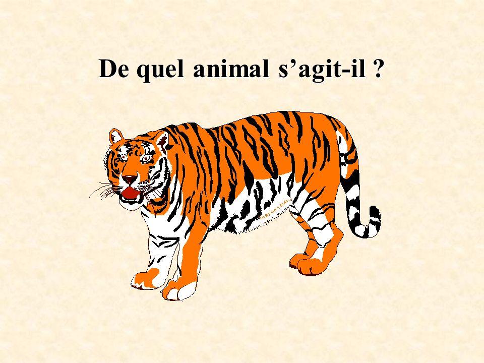 De quel animal sagit-il ?