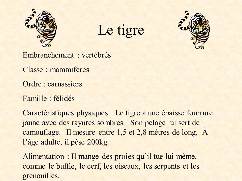 Le tigre Embranchement : vertébrés Classe : mammifères Ordre : carnassiers Famille : félidés Caractéristiques physiques : Le tigre a une épaisse fourrure jaune avec des rayures sombres.