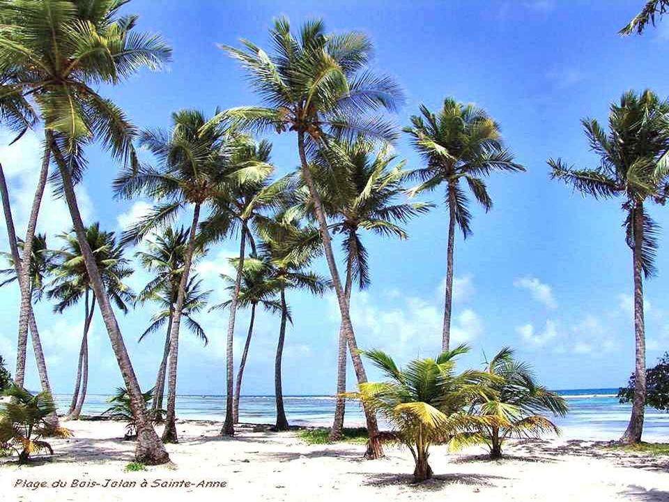Le palmier : la réussite généreuse. Baigné par le soleil, résistant aux vents, cet arbre est associé à la victoire, à la prospérité et à la richesse.
