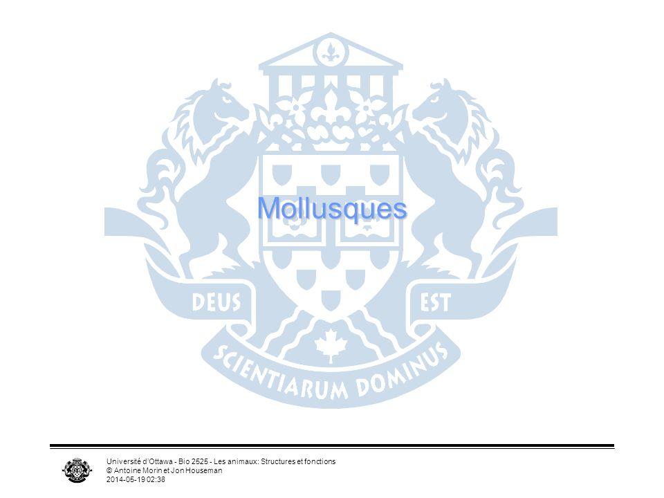 Université dOttawa - Bio 2525 - Les animaux: Structures et fonctions © Antoine Morin et Jon Houseman 2014-05-19 02:39 Mollusques