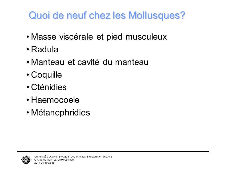 Université dOttawa - Bio 2525 - Les animaux: Structures et fonctions © Antoine Morin et Jon Houseman 2014-05-19 02:39 Quoi de neuf chez les Mollusques
