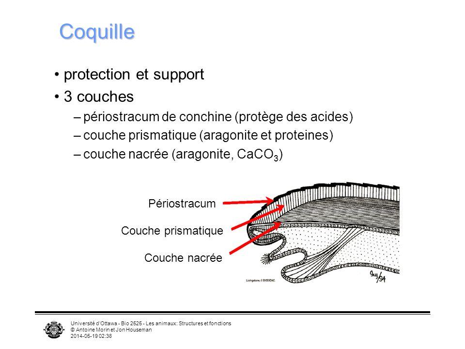 Université dOttawa - Bio 2525 - Les animaux: Structures et fonctions © Antoine Morin et Jon Houseman 2014-05-19 02:39 Coquille protection et support 3