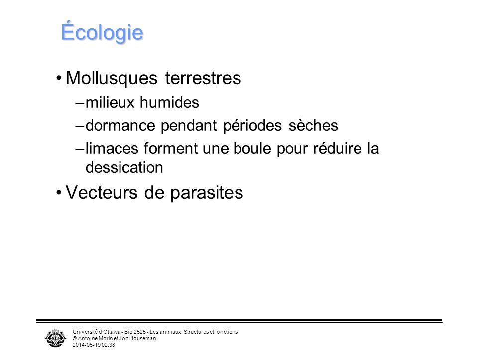 Université dOttawa - Bio 2525 - Les animaux: Structures et fonctions © Antoine Morin et Jon Houseman 2014-05-19 02:39 Écologie Mollusques terrestres –