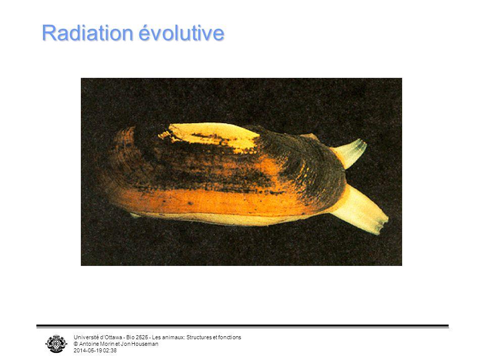 Université dOttawa - Bio 2525 - Les animaux: Structures et fonctions © Antoine Morin et Jon Houseman 2014-05-19 02:39 Radiation évolutive