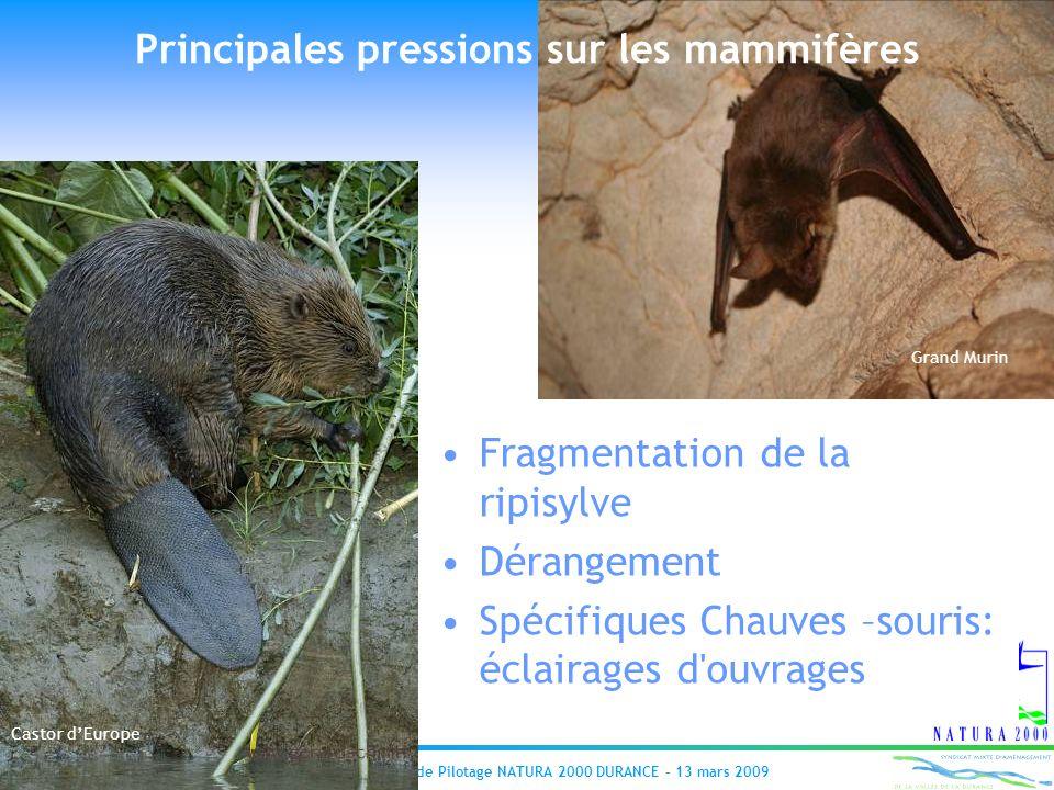 Réunion du Comité de Pilotage NATURA 2000 DURANCE – 13 mars 2009 Principales pressions sur les mammifères Fragmentation de la ripisylve Dérangement Sp