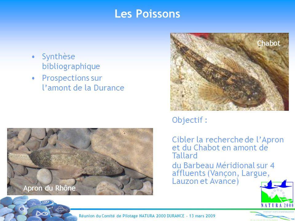 Réunion du Comité de Pilotage NATURA 2000 DURANCE – 13 mars 2009 Les Poissons Synthèse bibliographique Prospections sur lamont de la Durance Apron du