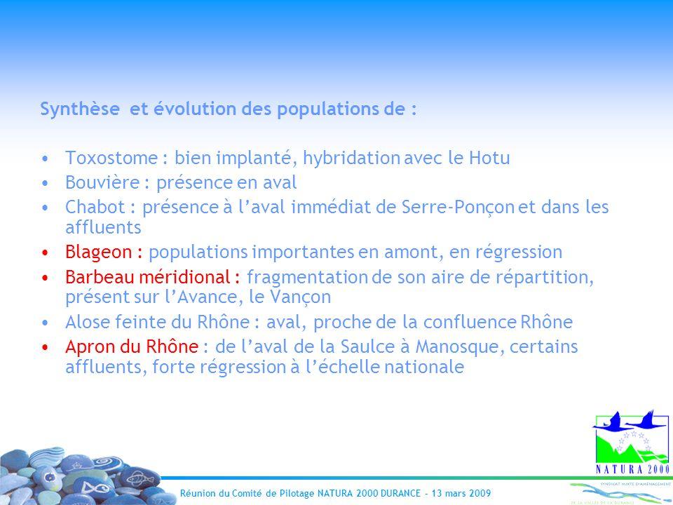 Réunion du Comité de Pilotage NATURA 2000 DURANCE – 13 mars 2009 Synthèse et évolution des populations de : Toxostome : bien implanté, hybridation ave