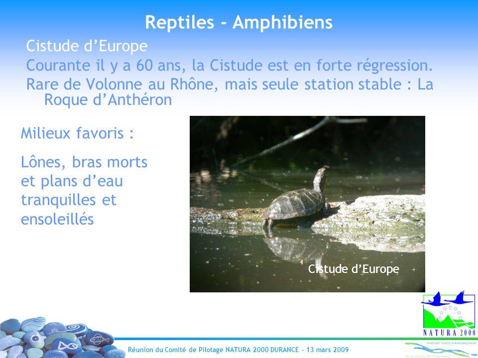 Réunion du Comité de Pilotage NATURA 2000 DURANCE – 13 mars 2009 Reptiles - Amphibiens Cistude dEurope Courante il y a 60 ans, la Cistude est en forte