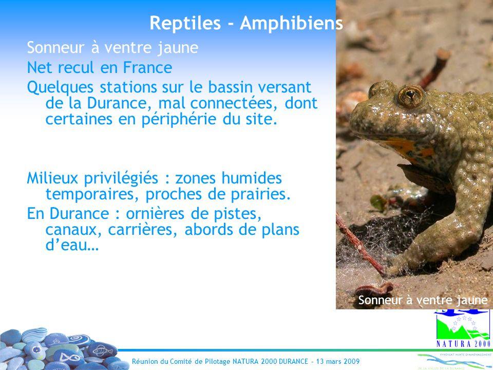 Réunion du Comité de Pilotage NATURA 2000 DURANCE – 13 mars 2009 et Sonneur à ventre Jaune : Sonneur à ventre jaune Reptiles - Amphibiens Sonneur à ve
