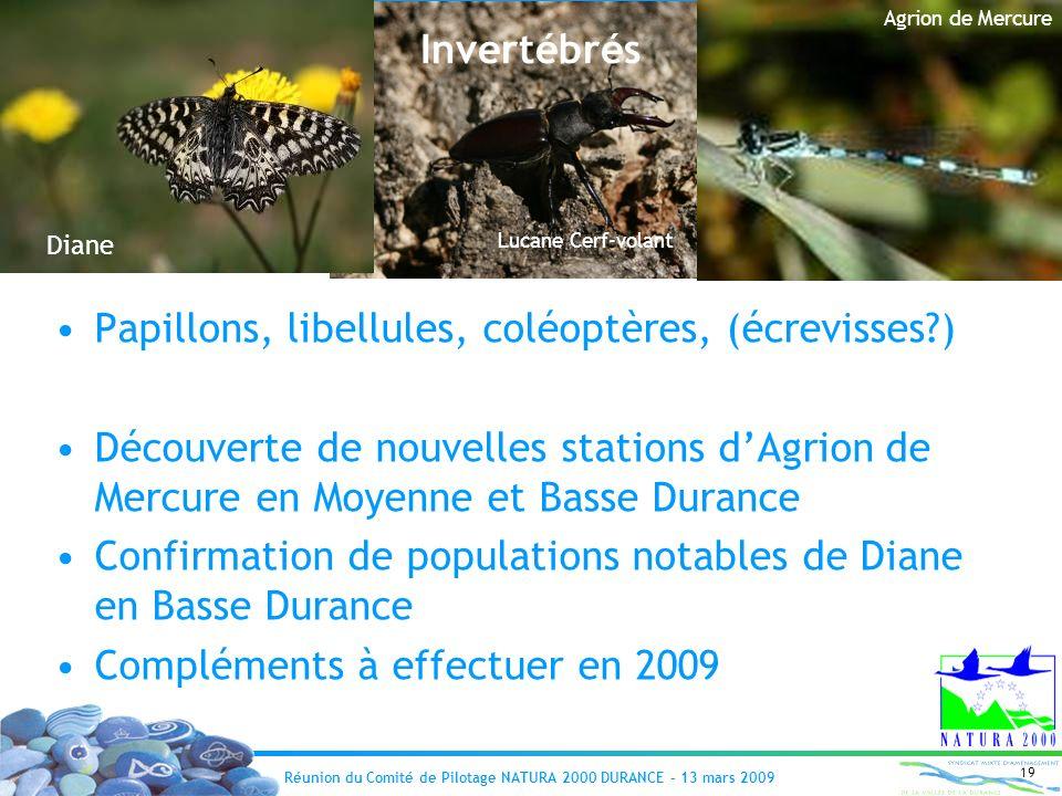 Réunion du Comité de Pilotage NATURA 2000 DURANCE – 13 mars 2009 19 Invertébrés Papillons, libellules, coléoptères, (écrevisses?) Découverte de nouvel