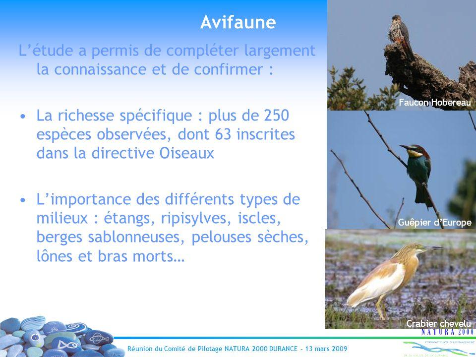 Réunion du Comité de Pilotage NATURA 2000 DURANCE – 13 mars 2009 Avifaune Faucon Hobereau Guêpier dEurope Crabier chevelu Létude a permis de compléter