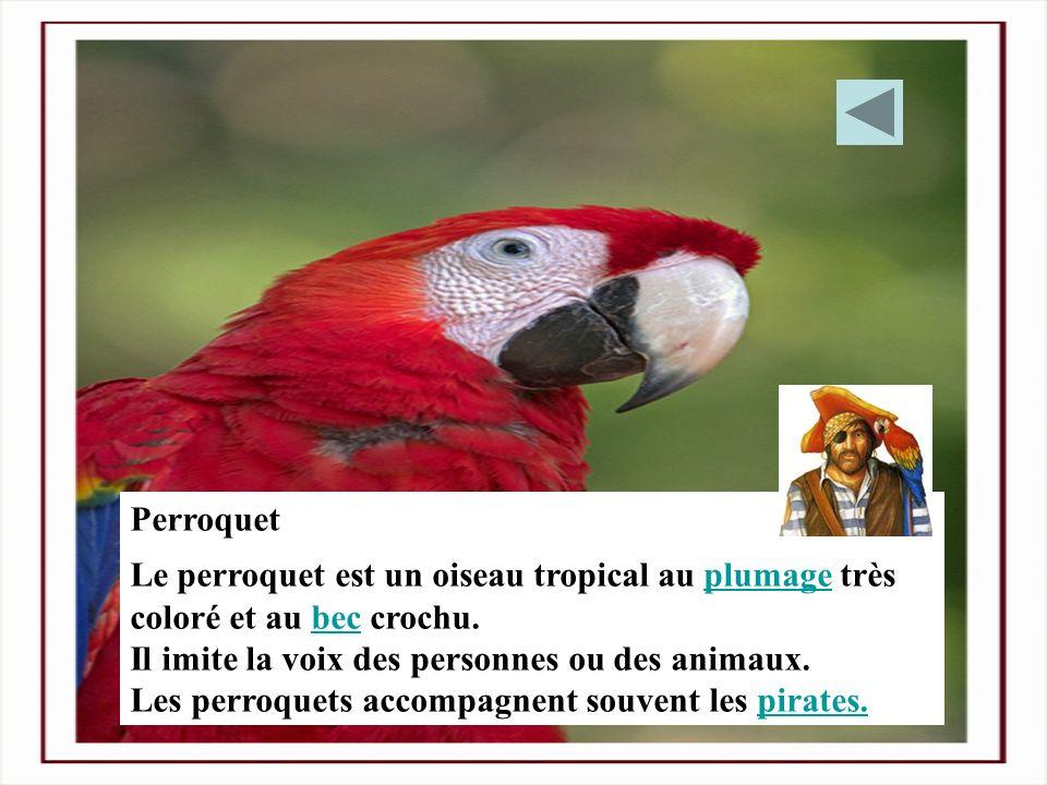 Perroquet Le perroquet est un oiseau tropical au plumage très coloré et au bec crochu.plumagebec Il imite la voix des personnes ou des animaux. Les pe
